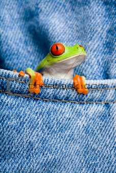 frog in pocket