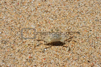 Camouflaged crab on the sand