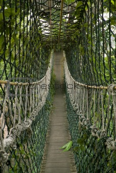 bridge inside tropical jungle or rainforest