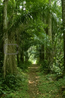 rainforest or tropical jungle