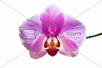 flowers purple orchids