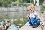 Cute little boy feeding ducks