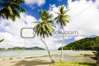 Bay, Tobago