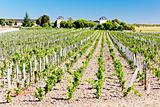 vineyard and Chateau Calon-Segur, Saint-Estephe, Bordeaux Region, France
