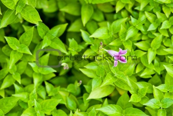Green leafs with Orchid background