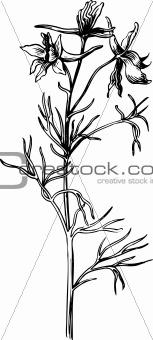 Branch of Delphinium elatum