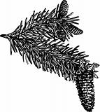 Branch of  pine cones