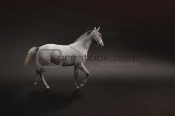 Gray horse isolated on black