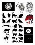 Family cat's