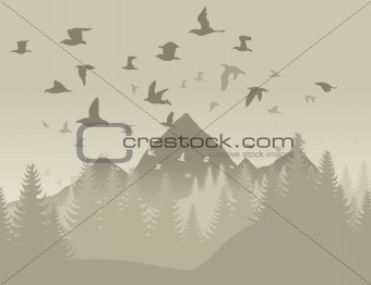 Birds in mountains