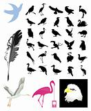 Collection of birds