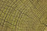 Log Texture