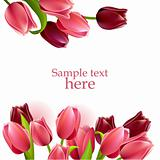Floral beautiful frame with pink and red tulips