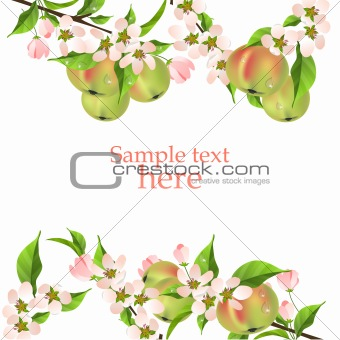 Beautiful background with green apples and blossoming apple branch
