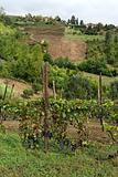 Hills of Monferrato