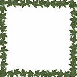 Frame green leaves