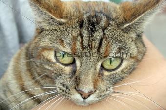 a cute tabby cat