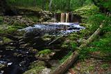 Falling Creek Falls