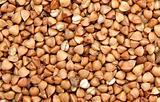 buckwheat;