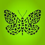 butterfly4