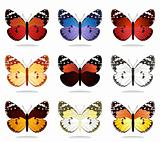 Collection of the butterflies4