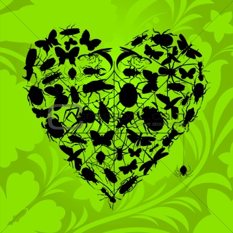 Heart of insects
