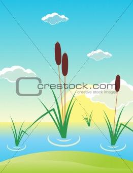Cane on a bog