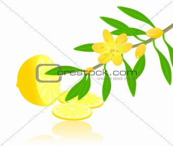 Citron paradise