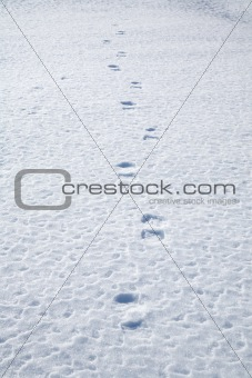 footsteps on snow