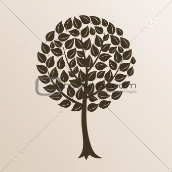 Park trees9