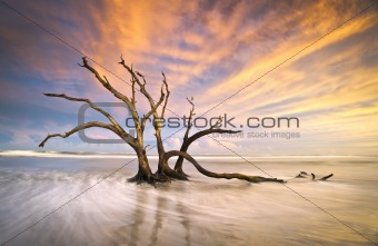 Folly Beach Dead Tree Driftwood Ocean Sunset Charleston SC Landscape