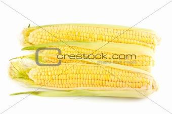 Three yellow corn on the cob