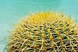round cactus
