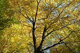 Tree Canopy In Autumn
