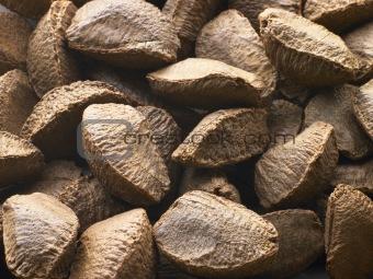 Brazil Nut Shells
