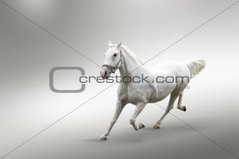 Isolated picture of white horse in motion