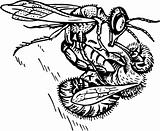 Insect battle
