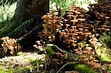 A town of mushroom