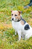 dog sitting on meadow
