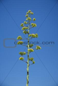 green tall plant