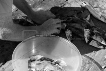 fisherman preparing catch of mackerel