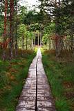 Track from wooden planks lead through forest