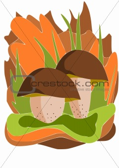 Two edible mushrooms - vector