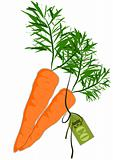 Big and health orange carrot - Vector