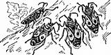 Stainer bugs