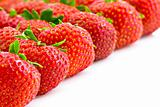 strawberries in rows