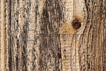 knot in wood - wood texture