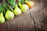 Freshly harvested pears