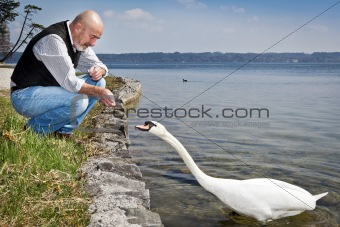old man and swan