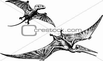 Pterodactyl or Pteranodon dinosaur